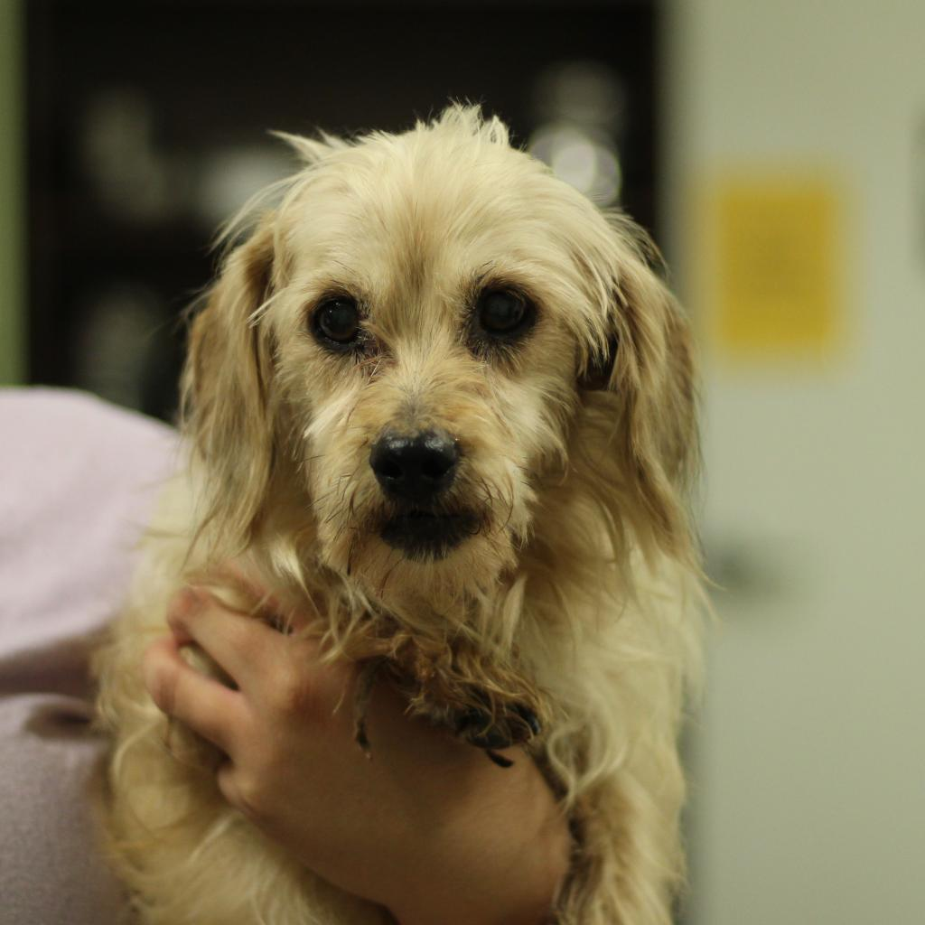 LSP is one dog we helped by having tumors removed and having her skin issues addressed.